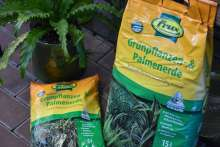 Grünpflanzenerde Palmenerde Frux Zimmerpflanzen Wortmann