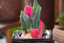 Tulpen Gartencenter Wortmann Hamburg Shop